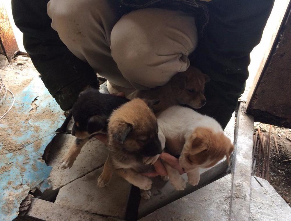 «Это невероятно»: Семеро щенков, спасенных в Красном Яру, обрели дом