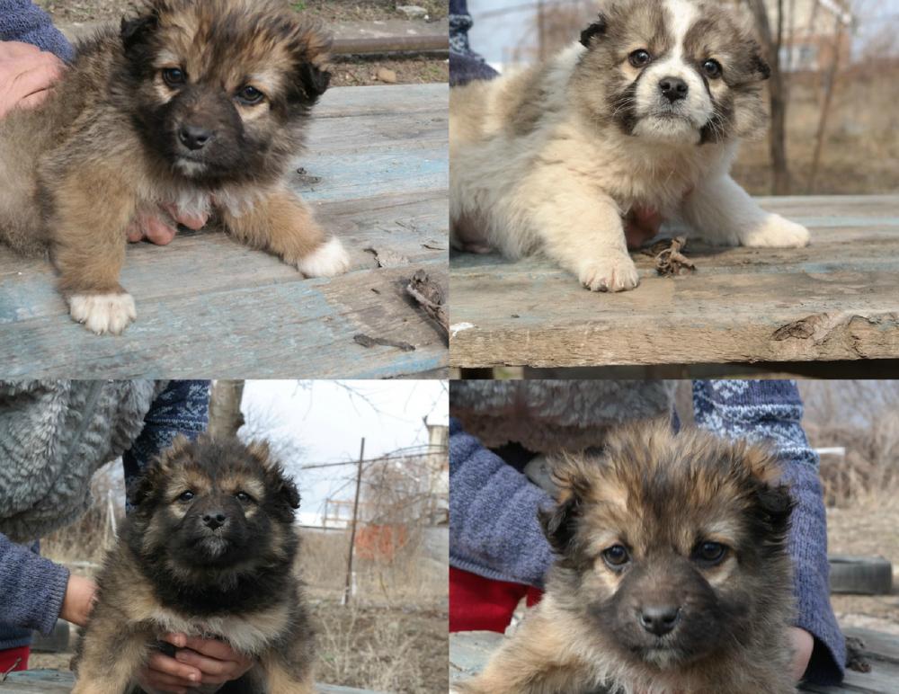 Несколько часов маленькие щенки просидели с мертвой мамой, которую сбила машина