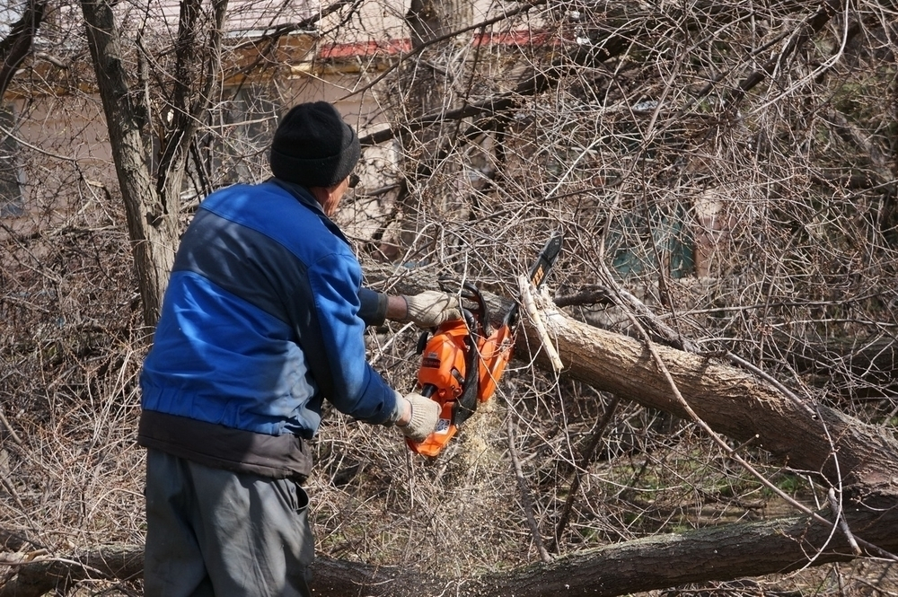 Сильный ветер повалил деревья, повредил три остановки, разрушил стелу строителям и свалил несколько рекламных щитов в Волгодонске
