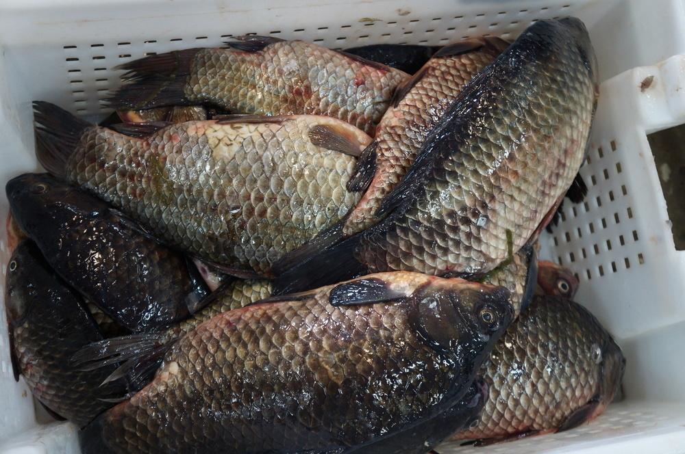 Волгодонские предприниматели торговали колбасой и рыбой неизвестного происхождения