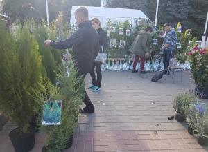 В субботу площадь Победы в Волгодонске будет усеяна изобилием продуктов, саженцев и сувениров