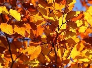 Сентябрь в Волгодонске будет теплым