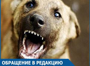 Символ года сорвался с цепи: Волгодонцы возмущены действиями заводчиков собак и «ужасными стаями»