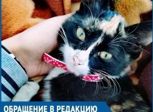Две недели мы боролись за жизнь нашей кошки, -  волгодончанка возмущена работой ветеринаров