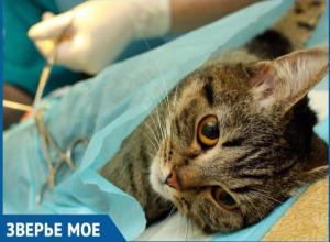 Любители животных в Волгодонске могут раз в месяц кастрировать и стерилизовать своего питомца в разы дешевле