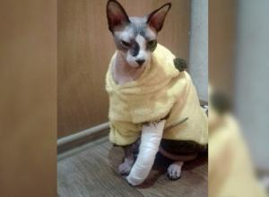 Невезучий кот: неудачное падение привело к оперативному вмешательству ветеринаров