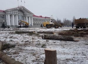 Остатки деревьев спиливают возле администрации Волгодонска
