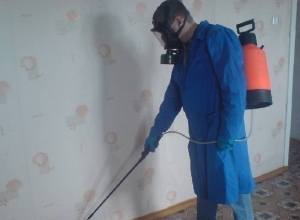 В волгодонских школах и детсадах даже тараканов травят фирмы из Ростова