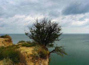 Цимлянское водохранилище не наполняется водой, но и не усыхает