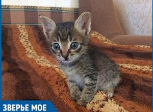 Ее выбросили на помойку как ненужный мусор, - волонтеры о спасении новорожденного котенка