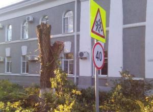 Тополя у администрации Волгодонска подстригли почти под корень