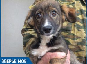 Четырехмесячного щенка выбросили погибать на стройку в Волгодонске