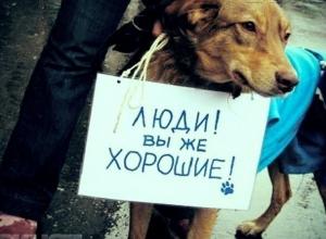 Зоозащитники Волгодонска снова забили тревогу: в городе появилась шайка подростков издевающихся над животными