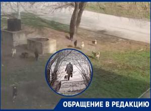 Доброта или безответственность: жительница Волгодонска кормит и разводит бродячих собак