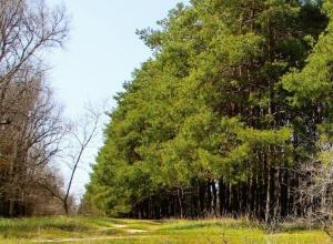 Волгодонцы не смогут выехать в осенний лес