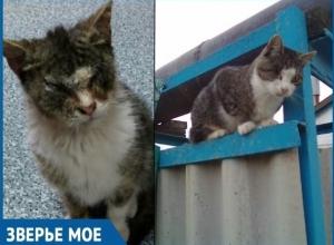 Он остро нуждался в помощи, но казалось уже отчаялся ее найти, - волонтеры о спасении особенного кота