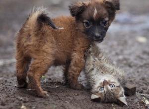 Бездомным животным попытаются найти хозяев в рамках акции «Делай Добро» на Комсомольской площади