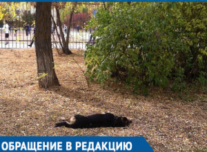 В Волгодонске массово потравили бездомных собак