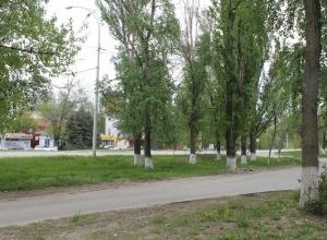 В Волгодонске на улице Морской срубят 100 деревьев