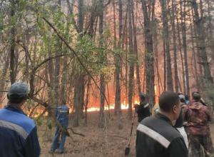 С поджигателя леса в Цимлянском районе потребовали несколько миллионов рублей