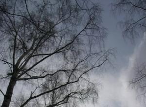 Пасмурной и холодной будет среда в Волгодонске