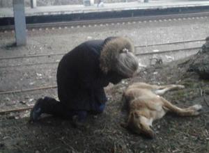 Недалеко от Волгодонска догхантеры травят бездомных и домашних собак