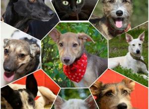 Из-за проблем с получением разрешения акция помощи бездомным животным в Волгодонске переносится
