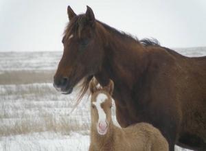 Календарь Волгодонска: под городом создан заповедник с дикими конями и кучугурами