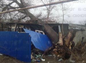 Рухнувшее от ветра огромное дерево разрушило дом в Волгодонском районе