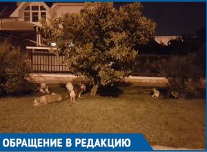 Свора из пяти крупных собак пугает жителей улицы Солнечная