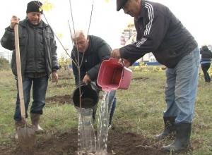В Волгодонске на поле между В-6 и В-7 высадили сотни деревьев