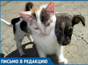 Весь двор был усыпан мертвыми животными, - волгодончанка о массовом отравлении кошек и собак на Степной
