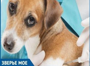 Кастрация со скидкой: В Волгодонске отметят Всемирный день стерилизации домашних и безнадзорных животных