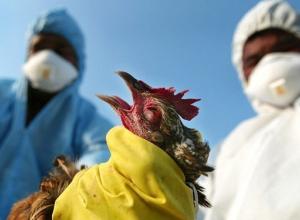 Волгодонцев просят быть осторожными при покупке птиц на стихийных рынках из-за птичьего гриппа