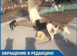 Младшеклассники спаслись от своры бродячих собак в магазине в центре Волгодонска