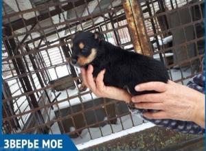 В Волгодонске нашли место для строительства приюта для безнадзорных животных