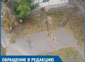 Спилили и оставили: жителям Волгодонска мешают лежащие на дорогах деревья