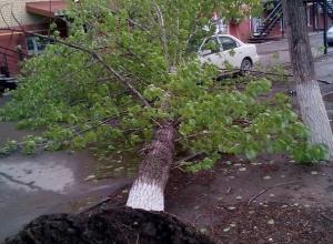 Опасное дерево, о скором падении которого предупреждали волгодонцы, упало на машину
