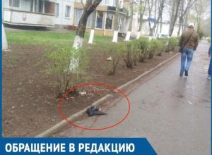 Аллею «мертвых птиц» в центре города высмеяли волгодонцы