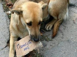 Сотрудникам рынка «Восточный» в Волгодонске угрожают штрафами за кормление бездомных животных