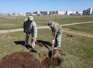 Экологи Волгодонска символически посадили три дерева на сохнущей аллеи в парке «Молодёжный»