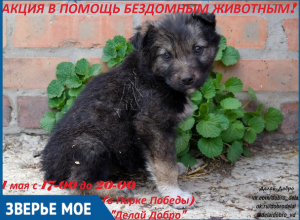 Люди смогут помочь бездомным животным во время благотворительной акции в Волгодонске