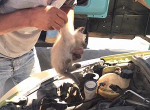 Трое котят стали причиной поломки машины в Волгодонске