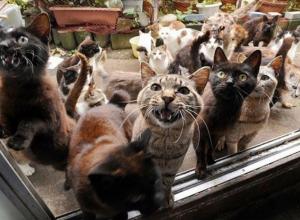 Хозяйку 20 кошек оштрафовали за вонь в подъезде после жалобы соседей