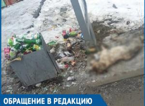 Труп собаки и кучи мусора ежедневно наблюдают волгодонцы на автобусной остановке на 30 лет Победы