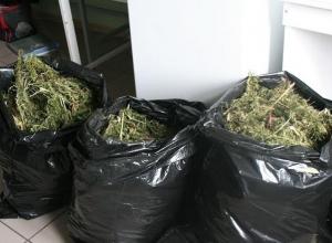 Безработный волгодонец хранил более 4 000 косяков марихуаны в гараже и на даче