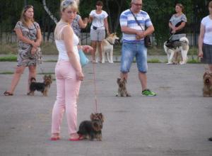 В Волгодонске полным ходом ведется подготовка к городской выставке собак