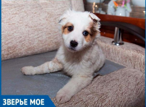 Волгодонская организация «Делай добро» ищет новых хозяев для невероятно ласкового щенка с трудным детством