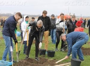 «Посади свое дерево!»: в Волгодонске пройдет День древонасаждения