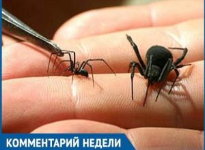 В Волгодонске нет вакцины от укусов опасного паука каракурта, - Анатолий Потехин